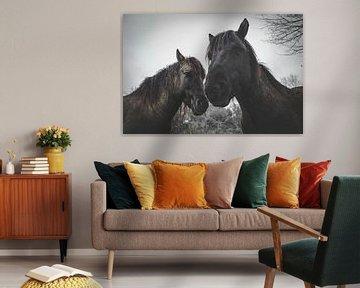 2 Paarden van Johan van Esch