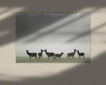 Edelhert hindes in de mist van Marcel de Bruin