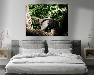 Ameisenbär in Costa Rica, Nationalpark Corcovado von Maro Lange