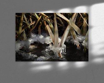 Frozen van Henk de Boer