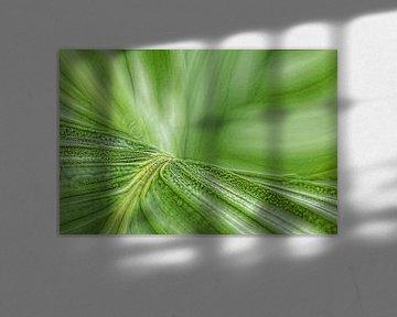 Grünes Blatt | Zimmerpflanze von Marianne Twijnstra-Gerrits