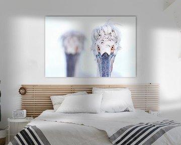 Kroeskoppelikanen (Pelecanus crispus) van Beschermingswerk voor aan uw muur