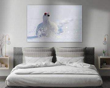 Mannetje Moerassneeuwhoen in winterkleed van Beschermingswerk voor aan uw muur