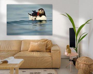 Papegaaiduiker zwemmend op zee van Beschermingswerk voor aan uw muur
