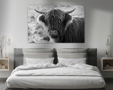 Schotse Hooglander van Ronald Mallant