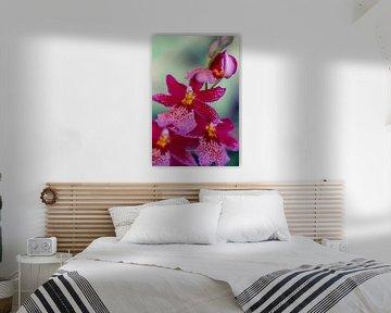Orchideen Rispe von Steffen Gierok