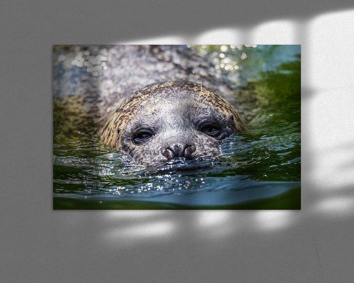 Sfeerimpressie: Zeehond van Jaap Tempelman