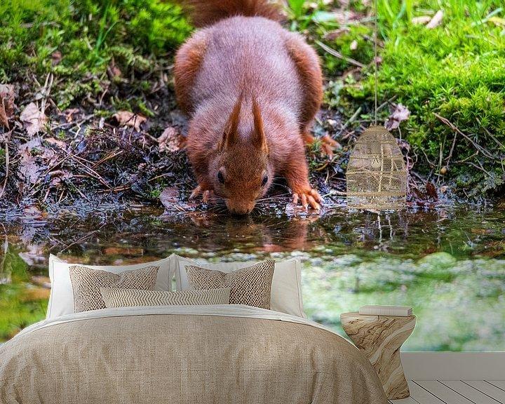Sfeerimpressie behang: eekhoorn van Jaap Tempelman