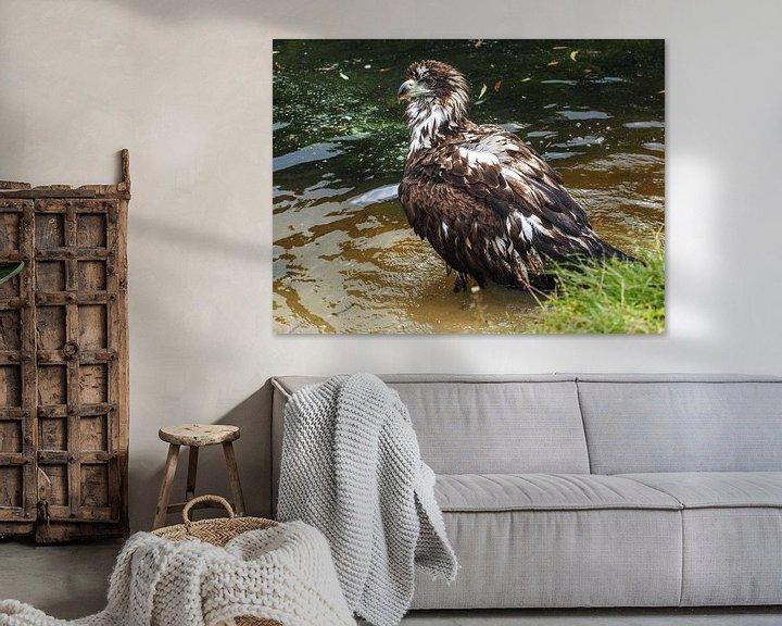 Beispiel: Seeadler von Loek Lobel