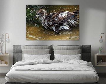 Seeadler von Loek Lobel