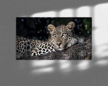 luipaard in Chobe N.P. Botswana van t.a.m. postma