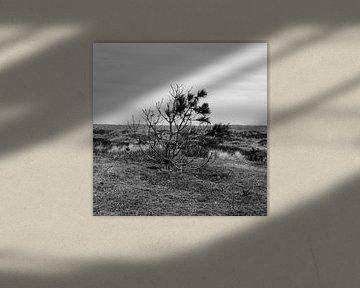 de nederlandse Joshua Tree van U2 van ticus media