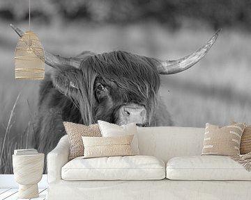 Schotse hooglander (zwart wit) van Anneke Hooijer