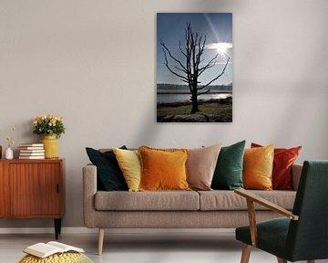 Lake tree van Celyn Vries