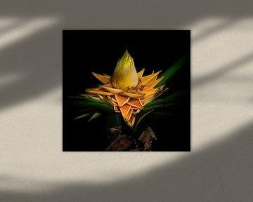 Goldene Lotusbanane von Loek Lobel