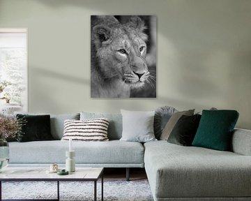 Löwenjungen-Schwanz in der Ferne von Patrick van Bakkum