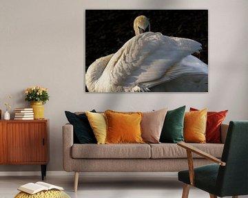 Witte Zwaan van Loek Lobel