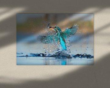 Martin-pêcheur - En un clin d'oeil