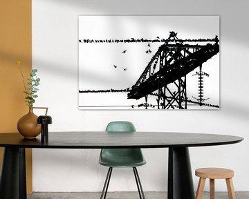 Gruppe Stare auf elektrischem Draht in schwarz und weiß von Marcel van Kammen