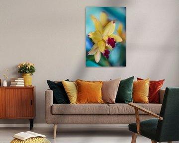 Veehouderij-orchidee van Steffen Gierok