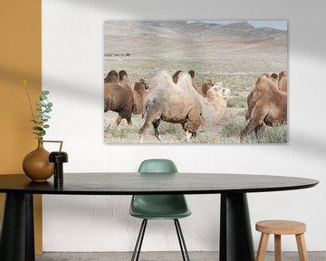 Kamelenkaravaan in Mongolie van Nanda Bussers