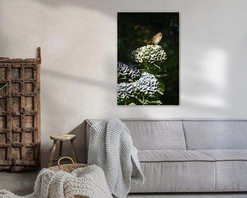 Hortensienschnäpper von Susan Dekker