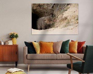 vossen welpje van Ina Hendriks-Schaafsma
