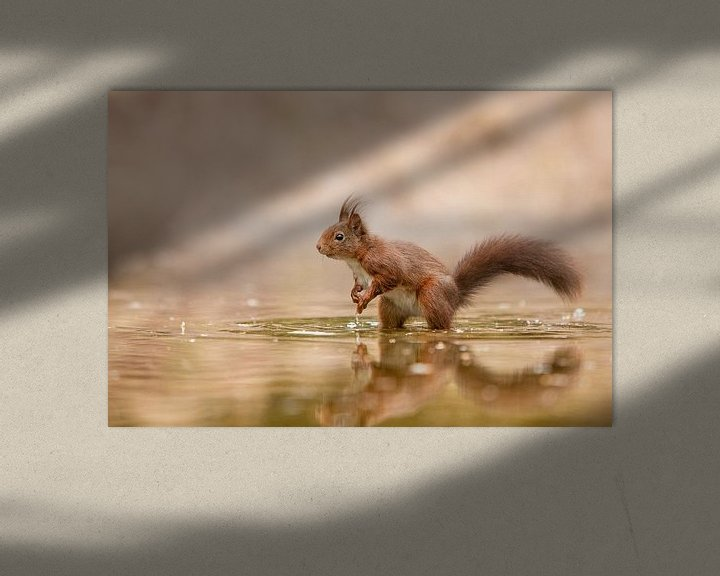 Sfeerimpressie: eekhoorn in het water van Ina Hendriks-Schaafsma