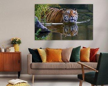 Schwimmender Tiger von Harry Eggens