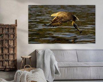 Seeadler mit Beute von Harry Eggens