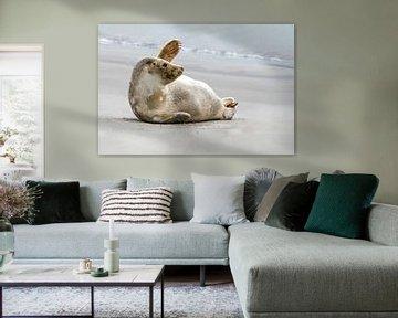 Winkender Seehund am Strand. von Albert Beukhof