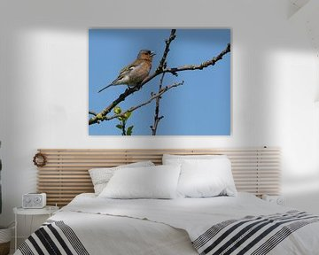 Finch, Mann. von Loek Lobel