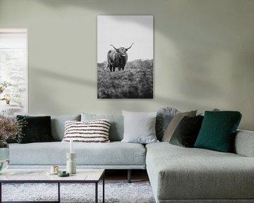 Schotse Hooglander van Martzen Fotografie