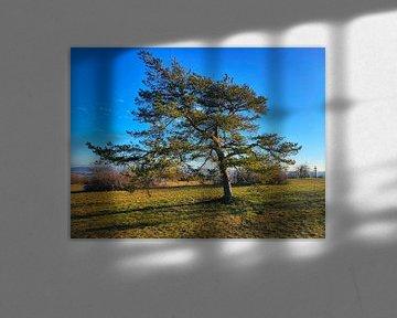 Baum auf dem Staffelberg