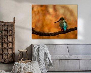 Eisvogel von Wendy Drent