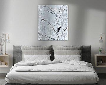 Mannetje Zwarte Specht (Dryocopus martius) foeragerend in een schitterend met sneeuw bedekt bos van AGAMI Photo Agency
