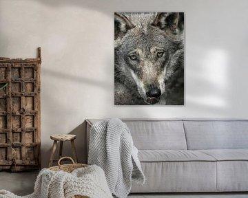 Wolf : Biotop Wildpark Anholter Schweiz von Loek Lobel