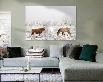 Een Schotse Hooglander en een Konikpaard in een winter landschap van Bas Meelker
