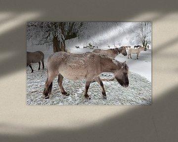Een kudde Konikpaarden in de sneeuw van Bas Meelker