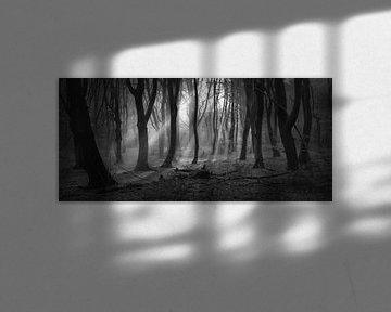 Mysterious Speulderforest.Oerbos. Award winning picture van Saskia Dingemans