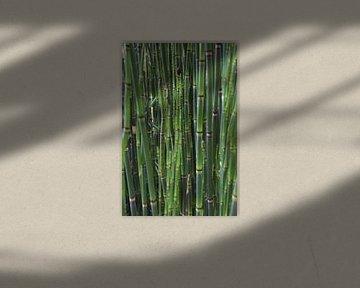 Bambus von Geert van Kuyck