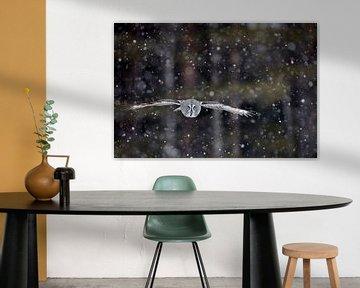 Laplaneule (Strix nebulosa) im Flug während eines Schneesturms, Finnland. von AGAMI Photo Agency