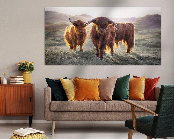 Sfeerimpressie: Schotse Hooglanders van Karel Ton