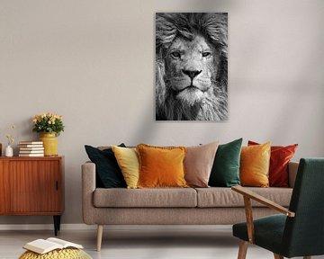 Schwarzweiß-Portrait eines mächtigen männlichen Löwen von Bas Meelker