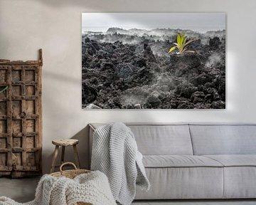 Lava Plant Hawaii van Anna Pors