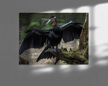 Afrikaanse Slangenhalsvogel : Koninklijke Burgers' Zoo van Loek Lobel