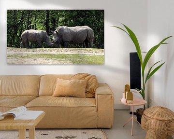 Breedlipneushoorn of Witte Neushoorn : Koninklijke Burgers' Zoo van Loek Lobel