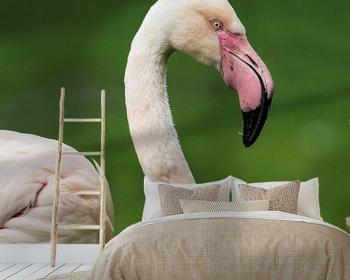 Beispiel fototapete: Europäischer Flamingo : Königlicher Bürgerzoo von Loek Lobel
