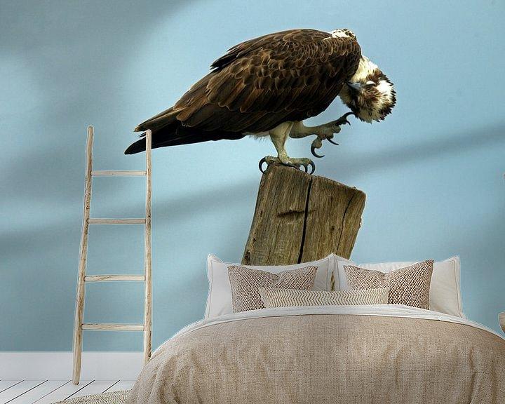 Beispiel fototapete: Fischadler von Ronald Jansen