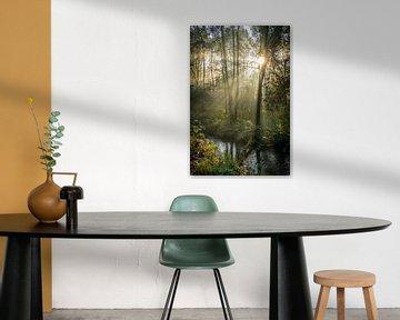 Photo nature de la forêt avec le soleil du matin sur Nicole Jenneskens